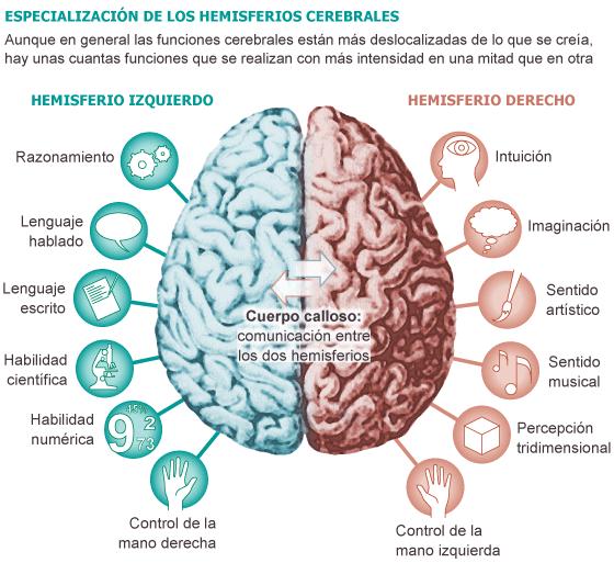 cerebro infografia